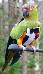 Тематический костюм для птицы «Праздничный»